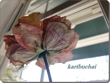 あの薔薇 … その後 …_c0079828_0334815.jpg