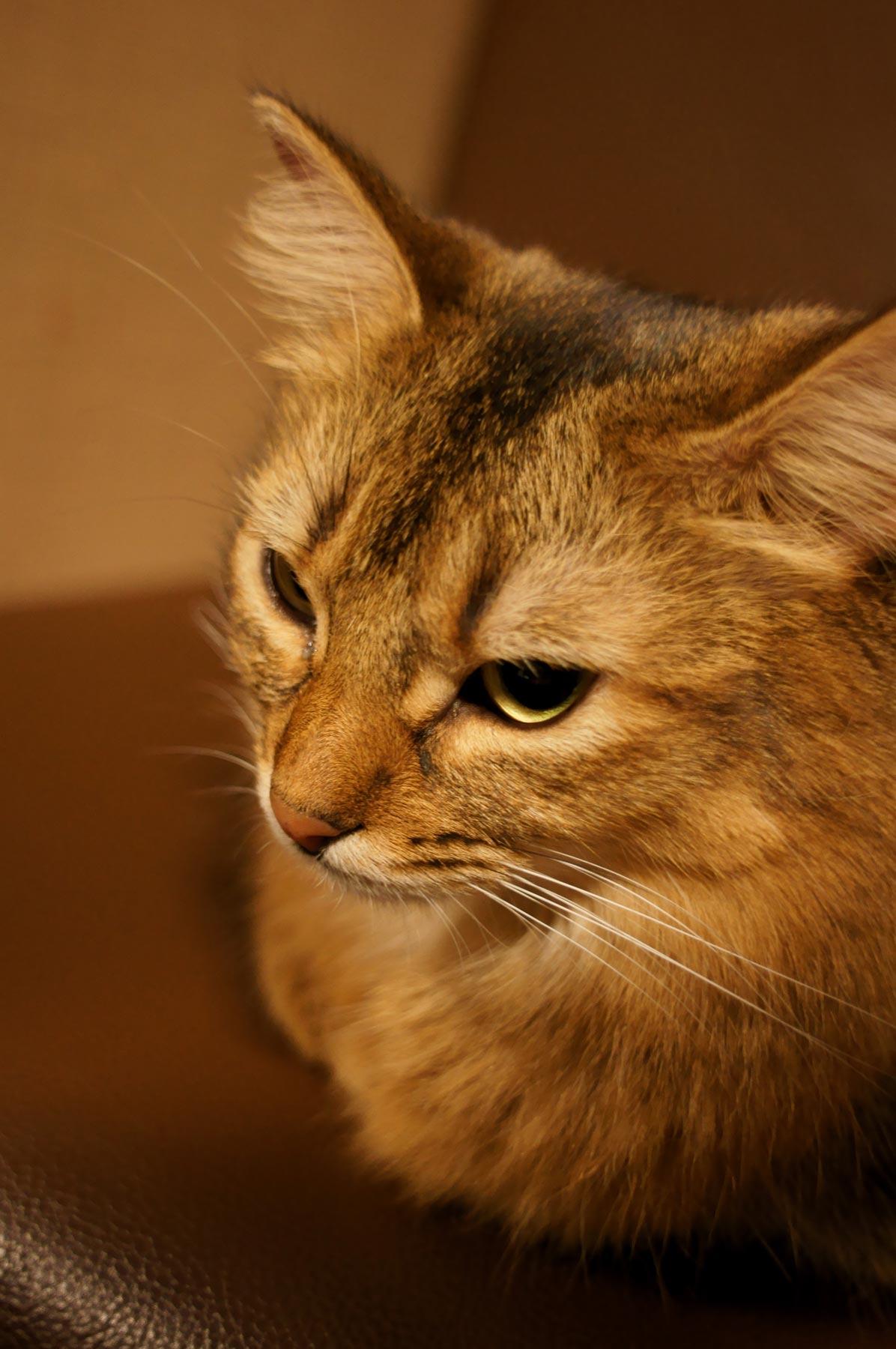 AF24mmF2.8で猫写真 その2_e0216133_22142333.jpg