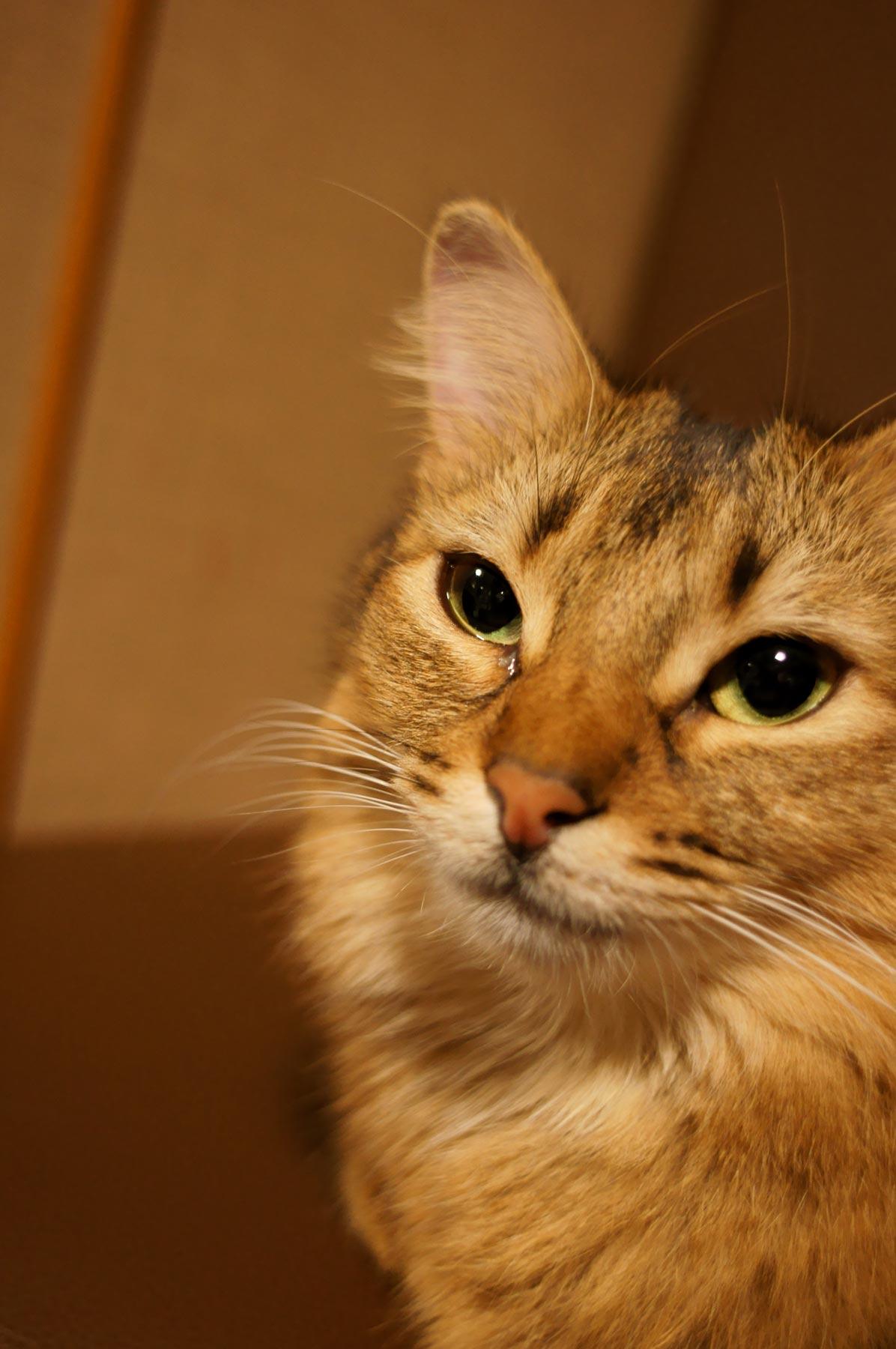 AF24mmF2.8で猫写真 その2_e0216133_22142826.jpg
