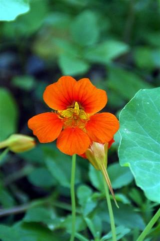 田舎の庭に咲いている草花_e0166355_4213858.jpg