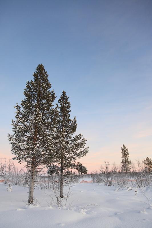 北極圏の雪景色_c0187779_8115229.jpg