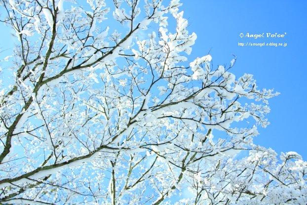 雪の華_d0147742_223651.jpg