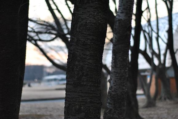 公・園・宇・宙 冬_b0194880_23461895.jpg