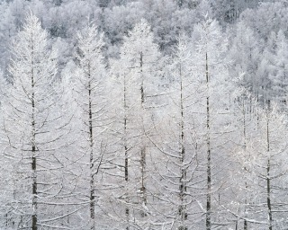 大雪_f0118184_12324440.jpg