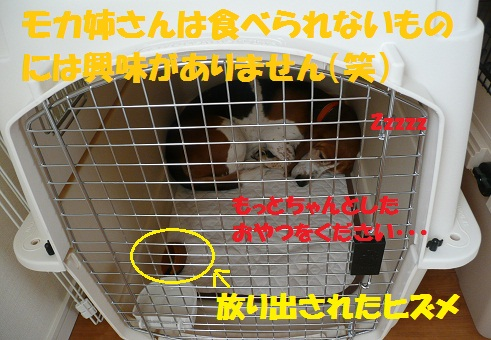 f0121712_1065959.jpg