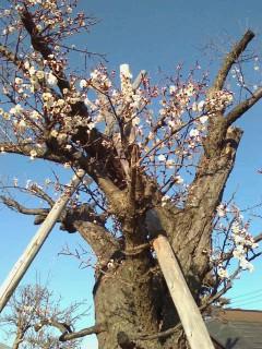 春の気配_c0200314_161425.jpg