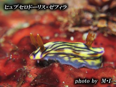 Divehouse Kanaloa  八丈島 ダイビングログ_b0189640_2220508.jpg