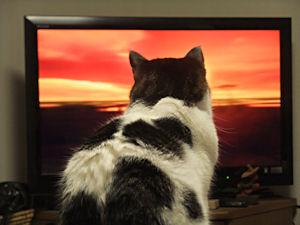 テレビ大好き!_d0034352_22235125.jpg