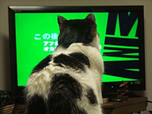 テレビ大好き!_d0034352_22253036.jpg