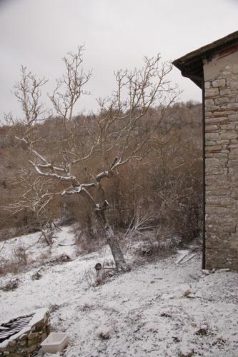 雪空を見上げながら・・・_f0106597_29153.jpg