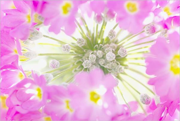笑顔が咲く_c0091505_17231347.jpg
