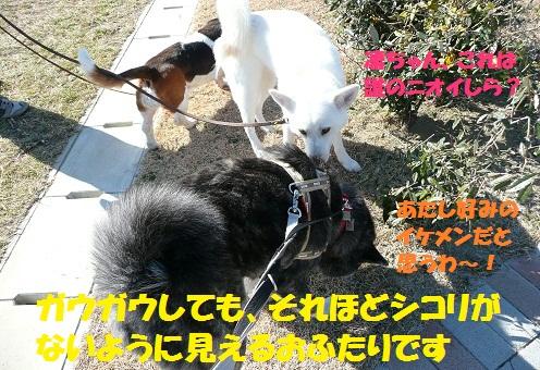 f0121712_127105.jpg