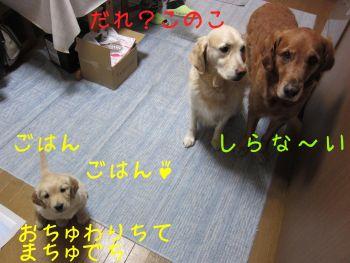 b0008217_17173581.jpg