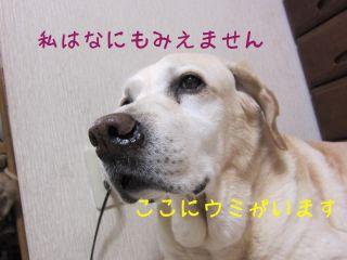 b0008217_171815.jpg
