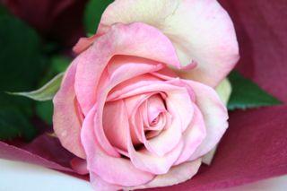 自由が丘のお花屋さん Fleuriste Charles Froment _d0026822_17281078.jpg