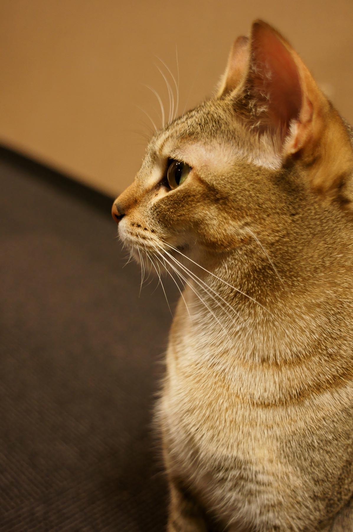 猫写真 3_e0216133_20483233.jpg