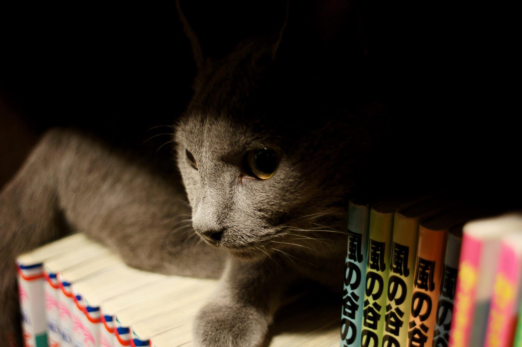 猫写真 3_e0216133_20485556.jpg