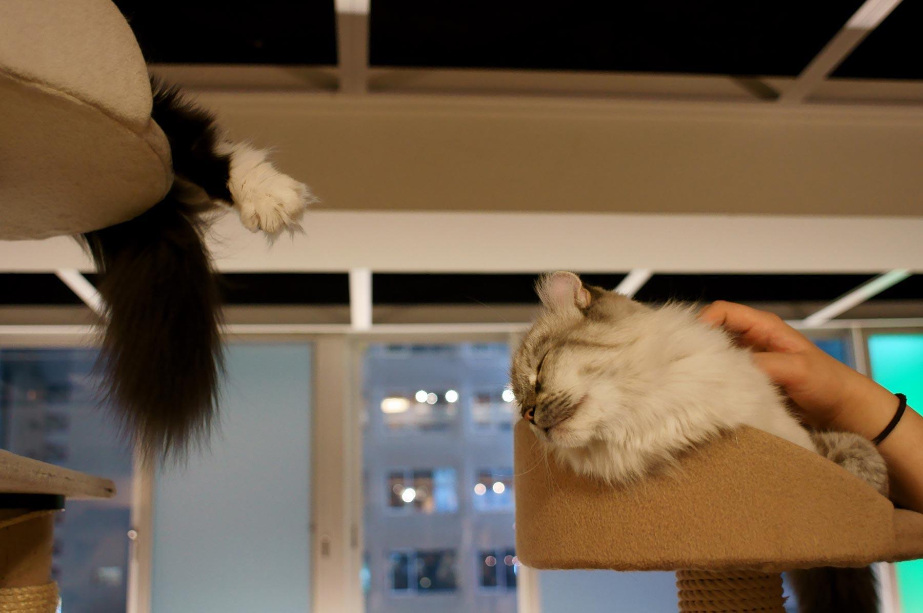 猫写真 3_e0216133_20491999.jpg