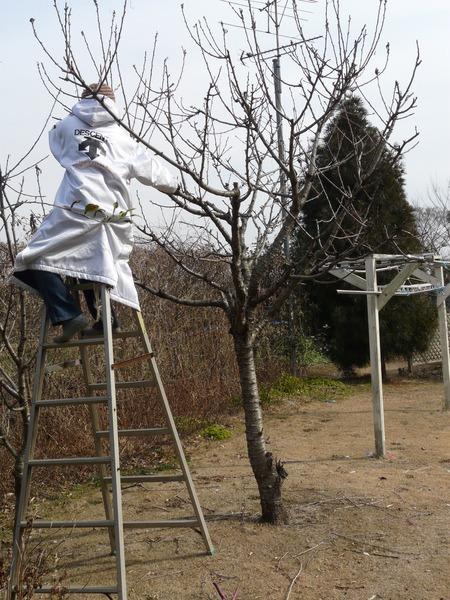 果樹の剪定♪_d0168170_1836054.jpg