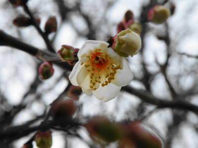 木に咲く花_c0193077_23411263.jpg