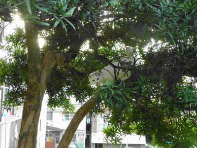 木に咲く花_c0193077_23414926.jpg