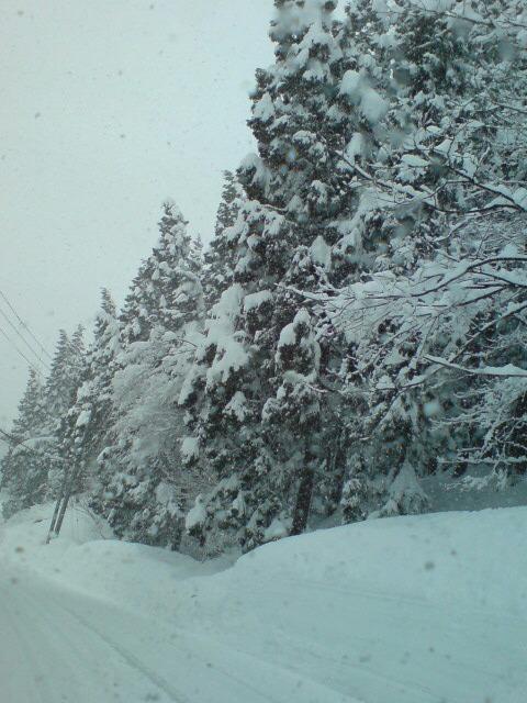 雪・雪・雪・雪・・・_d0182179_20473976.jpg