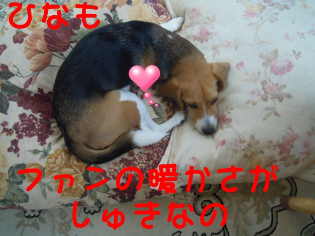 c0166622_1040187.jpg