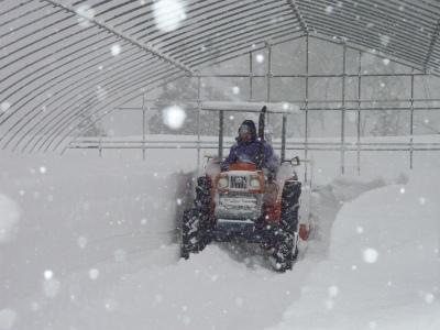 豪雪二週間以上降り続く_b0084826_8274271.jpg