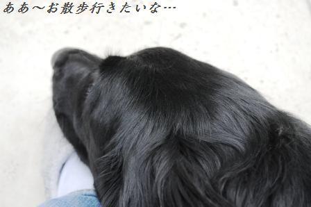 白菜と桜エビのしゃっきり香味和え_d0104926_2583918.jpg