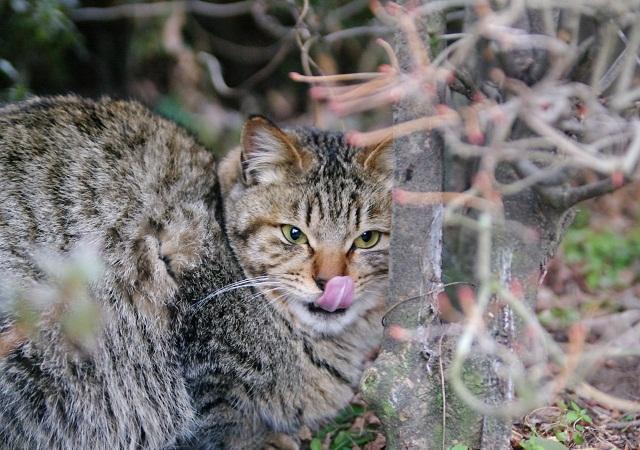 若猫たちは興味津津_f0214527_21495591.jpg