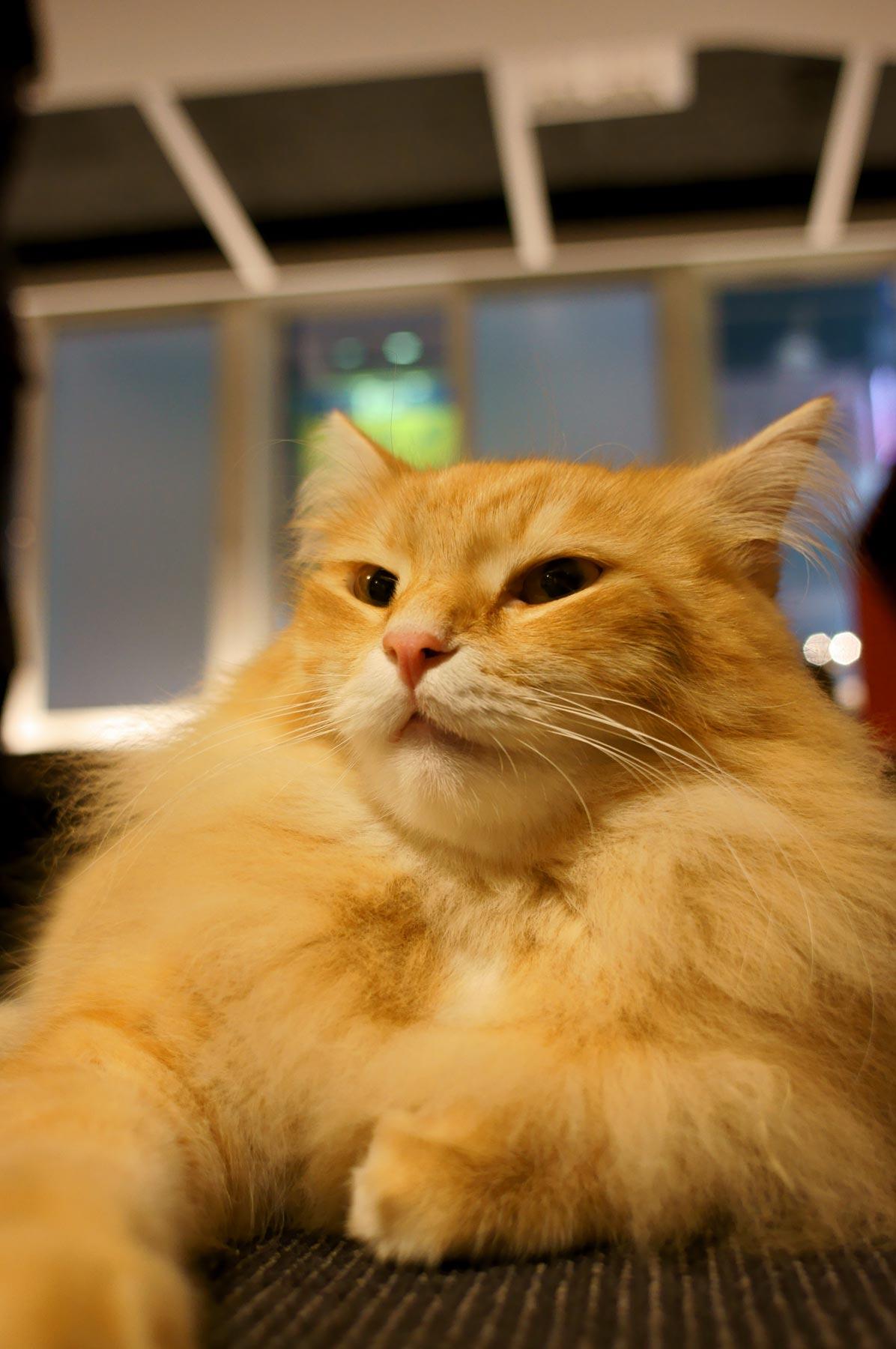 猫写真 4_e0216133_2227202.jpg