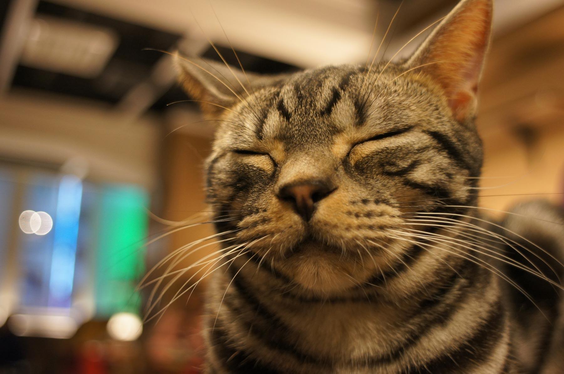 猫写真 4_e0216133_22272766.jpg