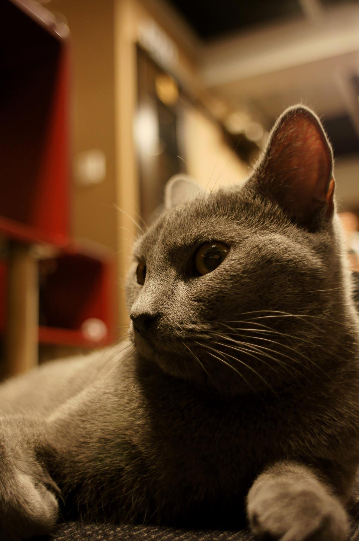 猫写真 4_e0216133_22273573.jpg