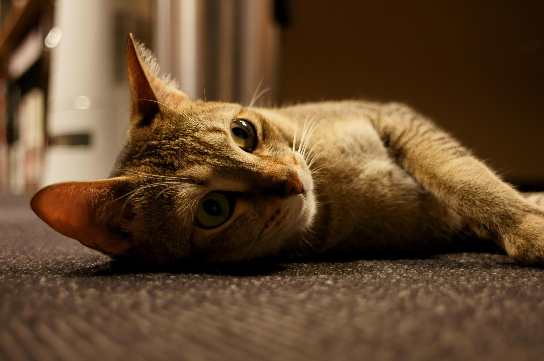 猫写真 4_e0216133_2227845.jpg
