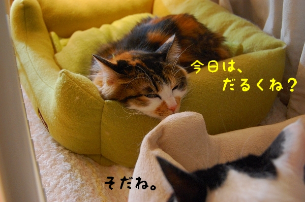 c0181639_0502351.jpg