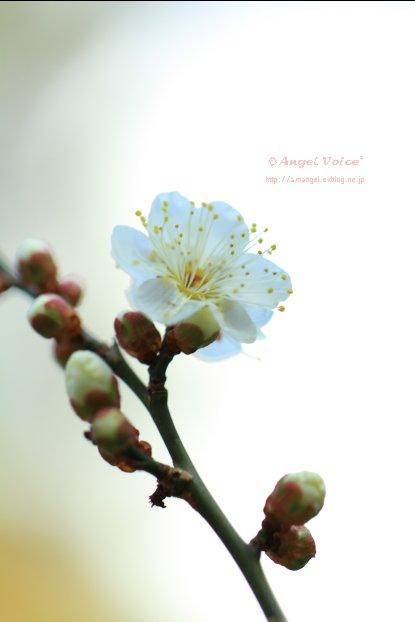 春への準備_d0147742_9422495.jpg