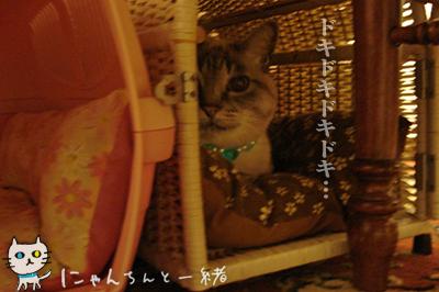 勘違い逃走_e0031853_21534212.jpg