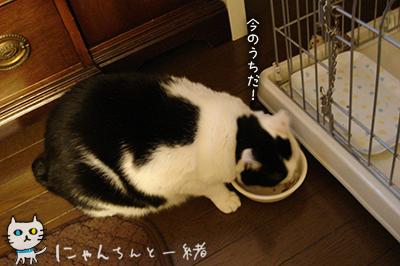 勘違い逃走_e0031853_2154727.jpg