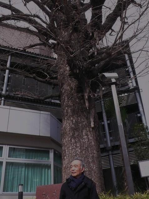 勝海舟邸の門の脇で時代を見つめていた銀杏の木は今日も元気です_b0096957_20402384.jpg