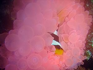 ★シミラン諸島を満喫★_f0144385_18364065.jpg
