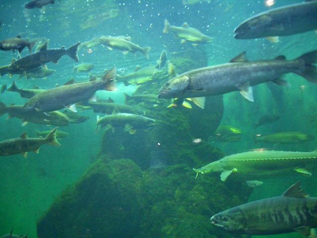 日本の水産業@食品の安全性、品質の安定、経済社会における食文化の発展を考えてみました。食とは何なのだろうか・・・その①_d0181492_12275692.jpg