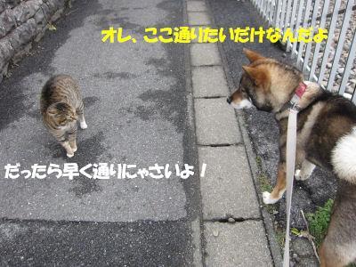 f0143123_2003037.jpg