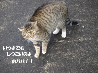 f0143123_2012871.jpg