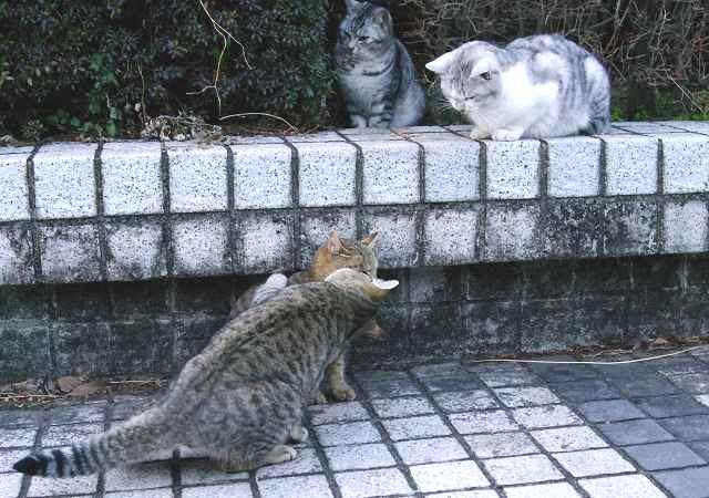 若猫たちは興味津津_f0214527_11564442.jpg