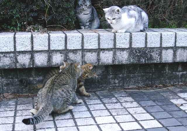 若猫たちは興味津津_f0214527_11574593.jpg