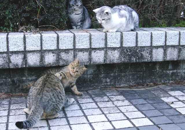 若猫たちは興味津津_f0214527_11595528.jpg