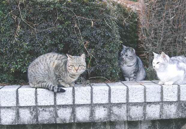 若猫たちは興味津津_f0214527_1205137.jpg