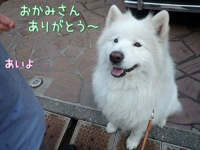 大好きおかみさん_c0062832_17531136.jpg