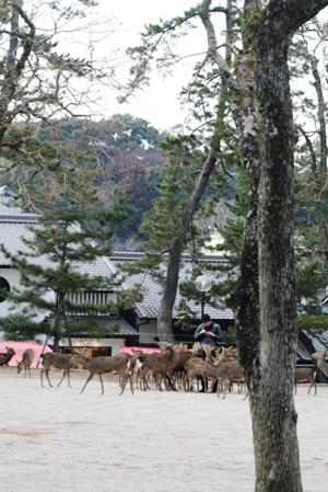 高円の秋野のうへの朝霧に妻呼ぶ牡鹿出で立つらむか_b0048834_6101970.jpg