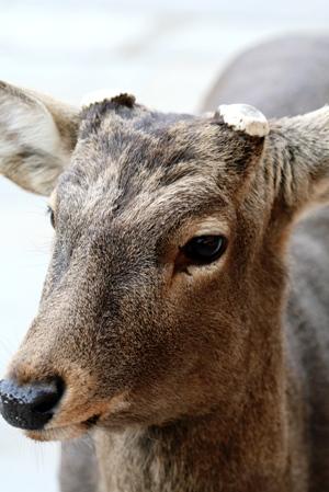 高円の秋野のうへの朝霧に妻呼ぶ牡鹿出で立つらむか_b0048834_611355.jpg